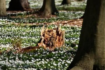 Litteraturen finder sted i Rudersdal: Skove