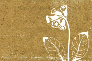 Kulturcafé: Naturen i litteraturen