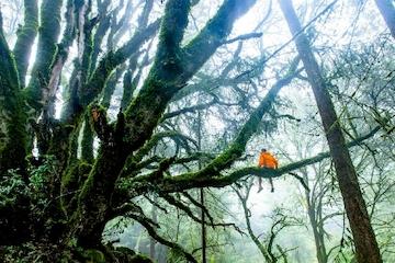 Kunsten at føle og tænke klart i samspillet med andre - om udvikling af selvagens