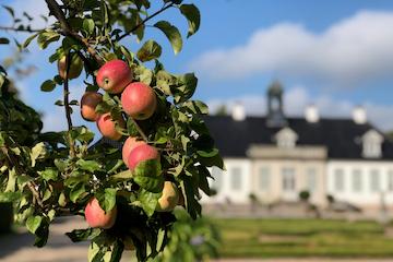 AFLYST: Æbledag i barokhaven på Gl. Holtegaard